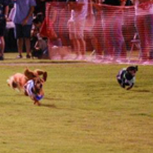 Tucson Oktoberfest Loves Dogs